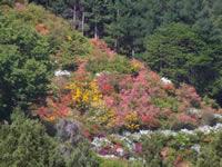 赤野田つつじ山公園