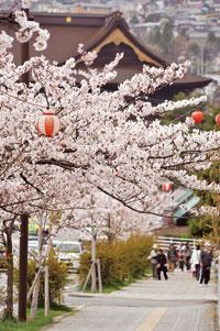 善光寺 城山公園の桜
