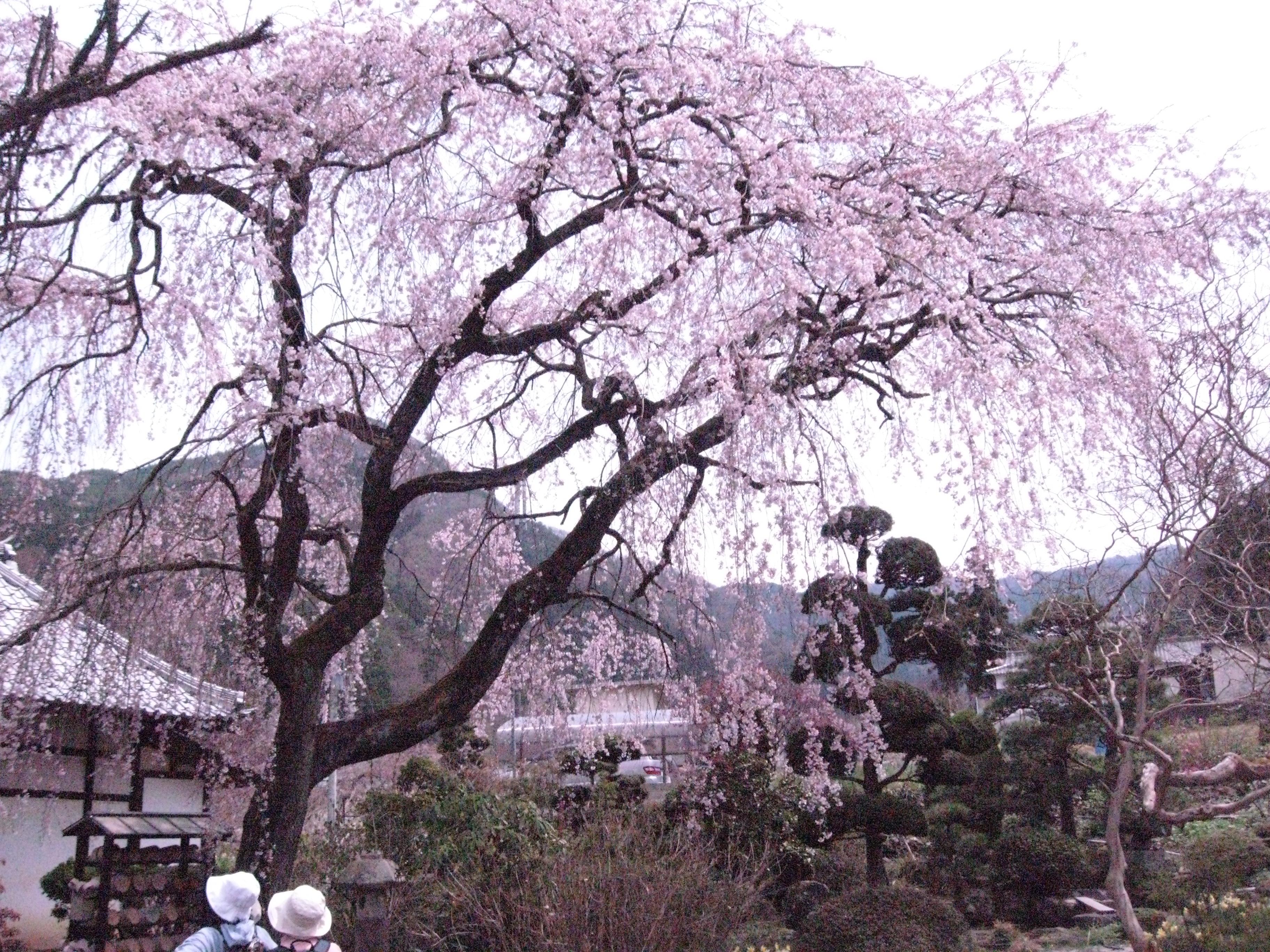 真田家ゆかりの古寺と桜めぐり ※終了しました。