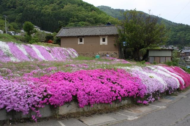 清野 花と歴史のハイキング ※終了しました。
