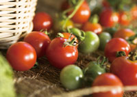 メロン・トマト・トウモロコシの収穫体験