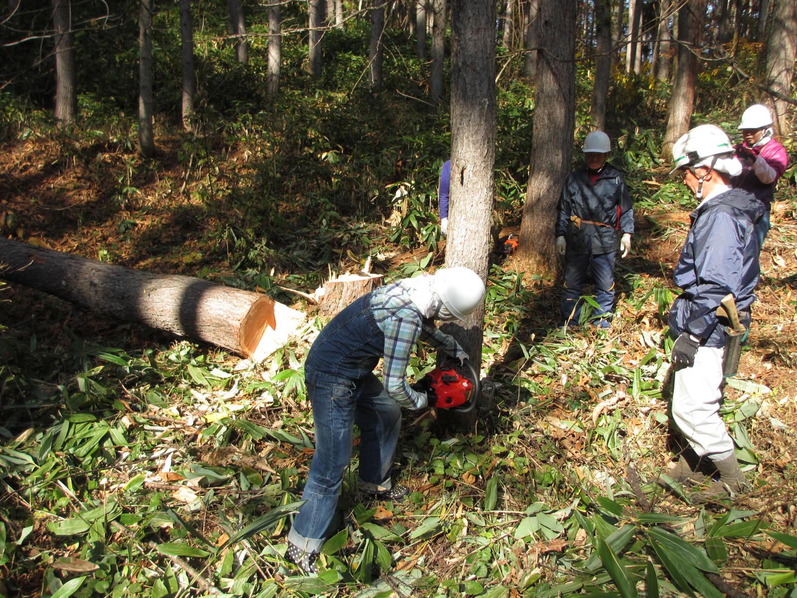 もりがーる♪ 林業体験