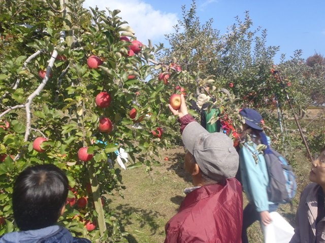 りんご狩りウォーキング